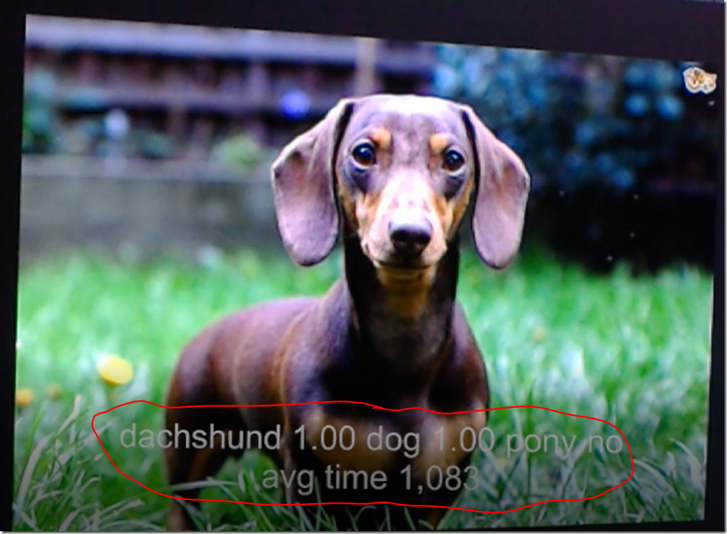 Third Experiment with Image Classification on Windows ML
